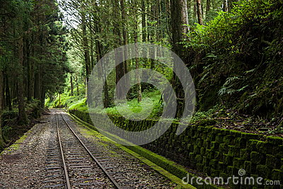 Alishan Forest Railway Narrow Gauge Train Stock Photo - Image ...