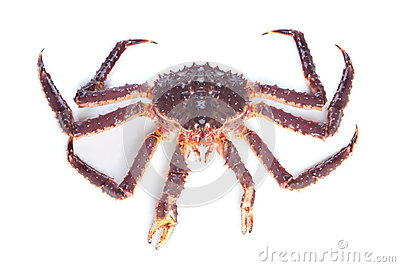 Alive kamchatka crab on white background