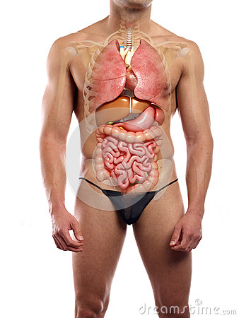 essays on male body image Body image outline essay essay outline d body image is a pressing a healthy body image along with the idea that men and women of all.