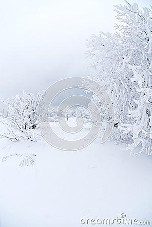 All snow under white