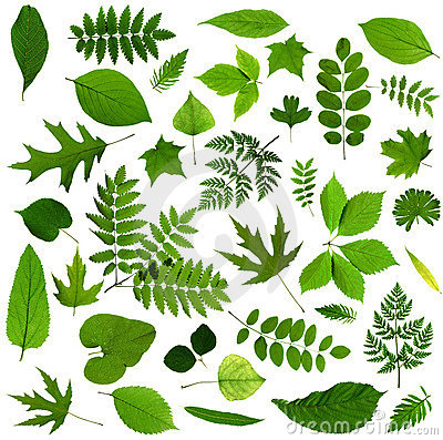 Free All Sorts Of Green Leaves Stock Images - 5409804