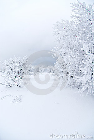 Free All White Under Snow Royalty Free Stock Photography - 12591277