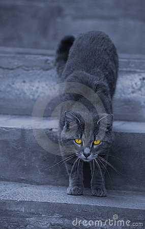 Alley cat with hypnotizing eyes