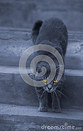 Alley cat with hypnotizing eyes