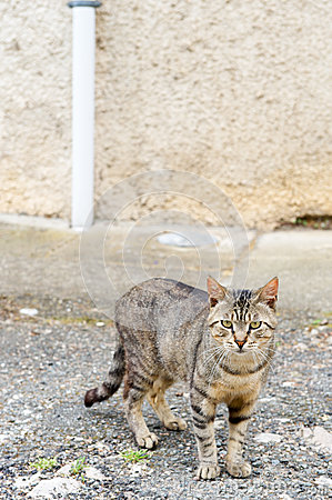 Alley cat at the street