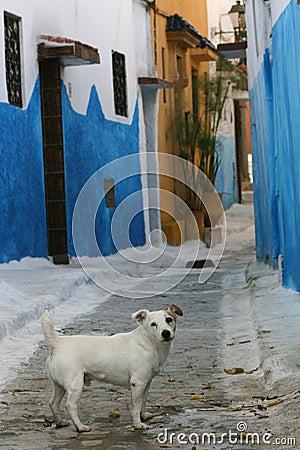 Alley dog