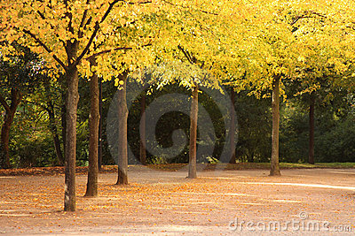 Alley in fall covered with leaves