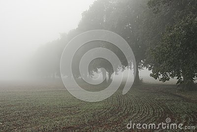 Alley and field in the mist