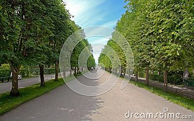 Alley in garden of Peterhof