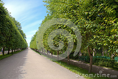 Alley in garden of Peterhof