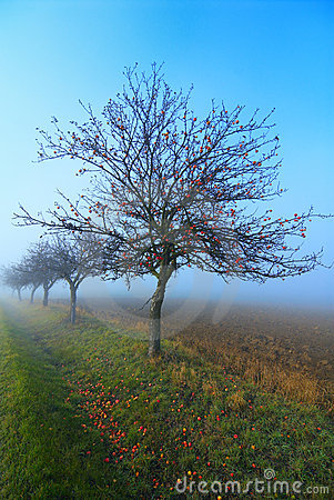 Free Alley Of Apple Tree Royalty Free Stock Images - 3840969