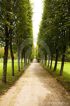 Alley in park, Arkhangelskoe