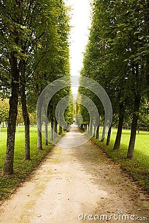 Alley in park, Arkhangelskoe