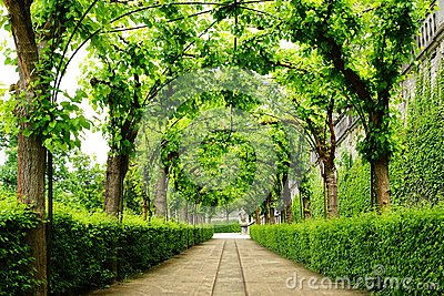 Alley Park in the Wurzburger Residenze. Germany