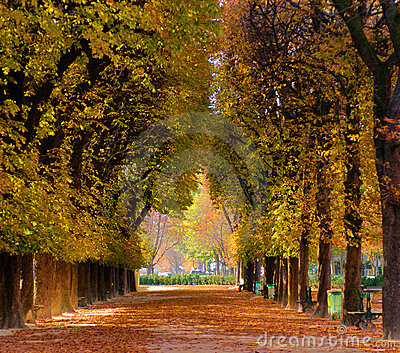 Alley of trees in autumn