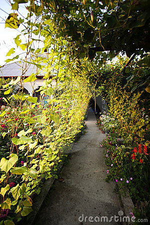 Alley through vine