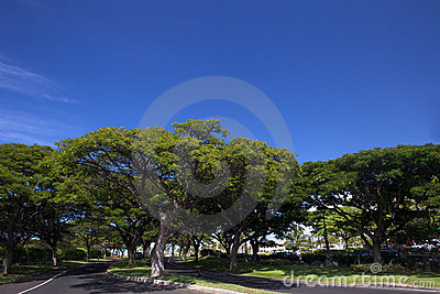 Alley Way, Trees And Blue Sky Stock Photography - Image: 11796322