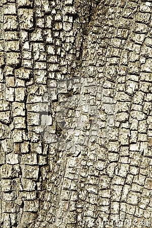 Alligator Juniper Treebark Background/Texture