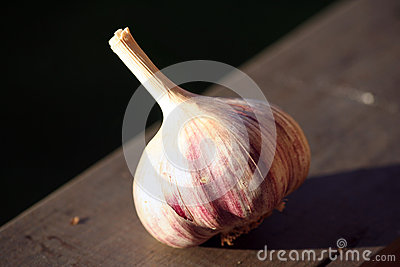 Allium sativum, commonly known as garlic