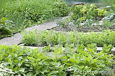 Allotment Garden Bed