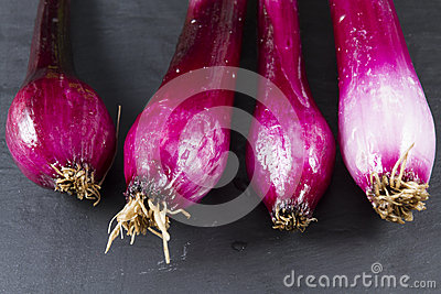 Allum purple and green salad spring onions, scallions, macro.