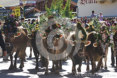 Almabtrieb in Austria Editorial Stock Photo