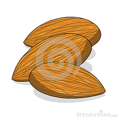 Almond nuts illustration