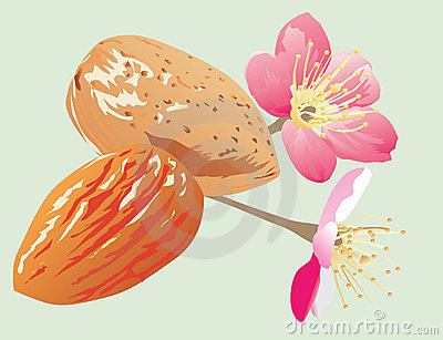 Almonds and flowers