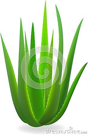 Free Aloe-vera. Royalty Free Stock Photo - 12098845