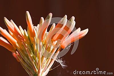 Aloe Vera Glow