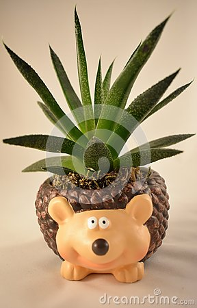 Free Aloe Vera Green Succulent Plant In A Cute Pot Hedgehog - Isolated On White Background Stock Photography - 103090682