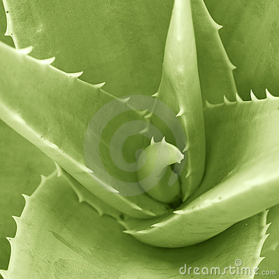 Aloesu szczegółu verta