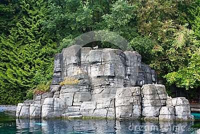 Alone bird on the rock