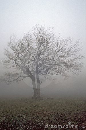 Alone fog s tree