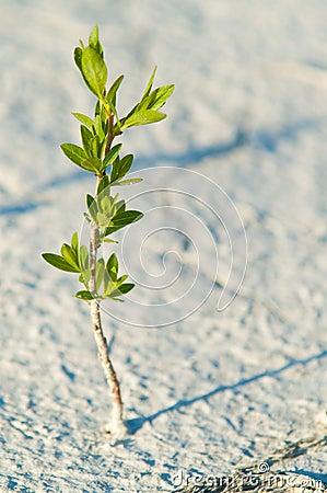 Alone green plant