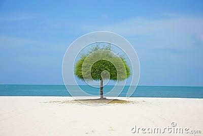 Alone green tree on beach
