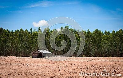 Alone hut