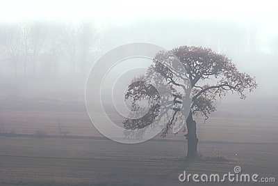 Alone in the misty morning