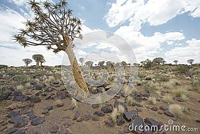 Alone standing tree