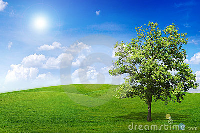 Alone Tree Stock Photos - Image: 20761963