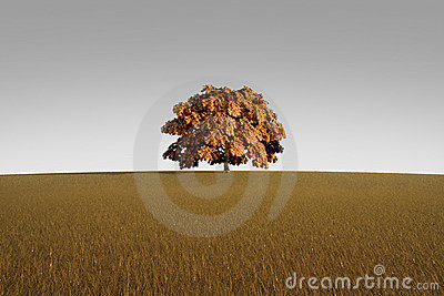 Alone tree in autumn