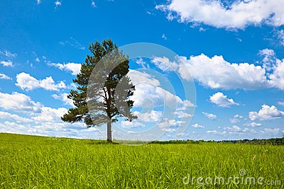 Alone tree in field