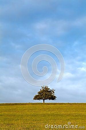 Alone tree on the horizon at sunrise