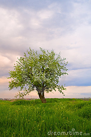 Free Alone Tree On Field At Sundown Royalty Free Stock Images - 6942669