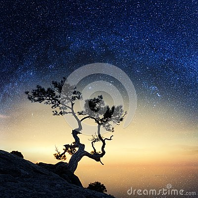 Free Alone Tree On The Edge Of The Cliff Royalty Free Stock Image - 104176836
