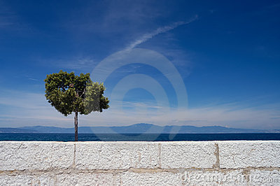 Alone tree and white wall