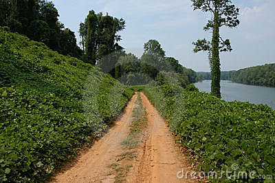 Along the kudzu path