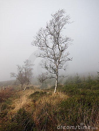 Along tree in the misty day