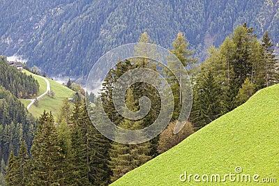 Alp forest landscape