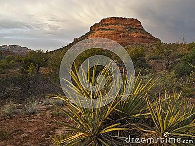 Alpenglow in the Northern Arizona Desert